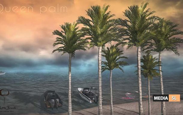 Queen Palm v1 – NEW