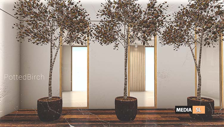 Little Branch Potted Birch – New Decor