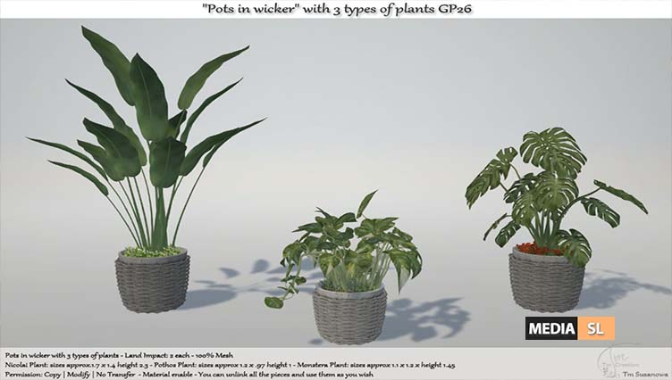 Pots in wicker with 3 types of plants – NEW DECOR