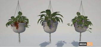 Pots Hanging with 3 types of plants – NEW DECOR