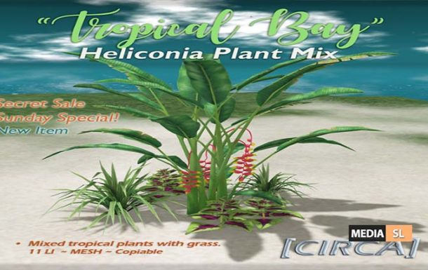 Tropical Bay Heliconia Plant Mix – NEW DECOR