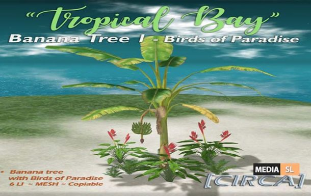 Tropical Bay – Banana Tree – NEW DECOR