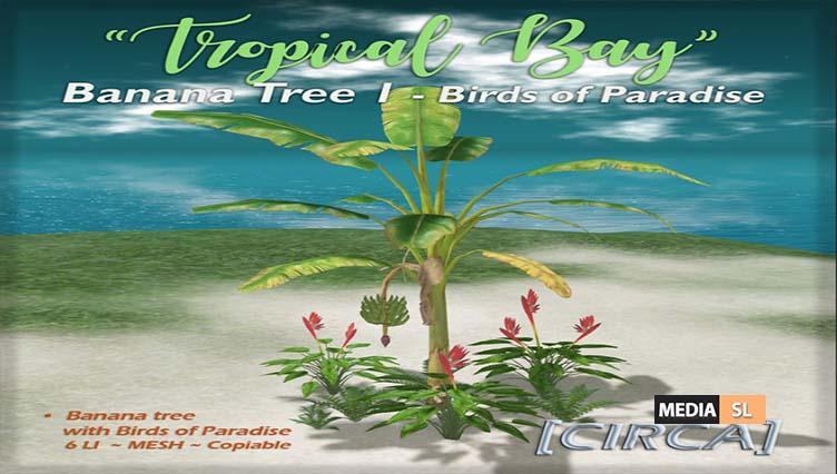 Tropical Bay – Banana Tree – NEW DECOR