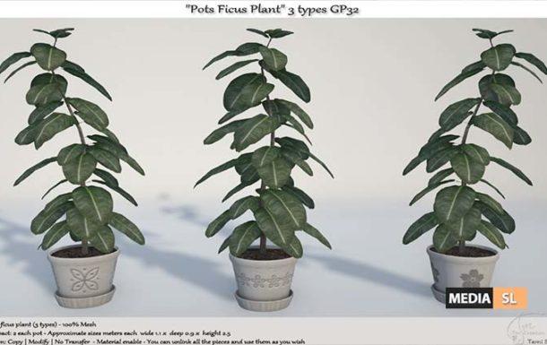 Pots Ficus Plant 3 types GP32  – NEW DECOR