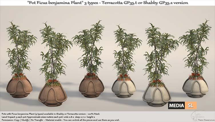 """""""Pots Ficus benjamina Plant""""  – NEW DECOR"""
